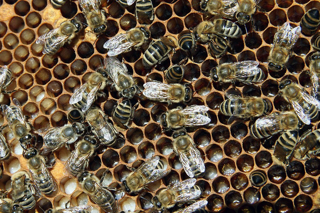 how-to-help-bees-climate-change-solutions-bee-the-hero