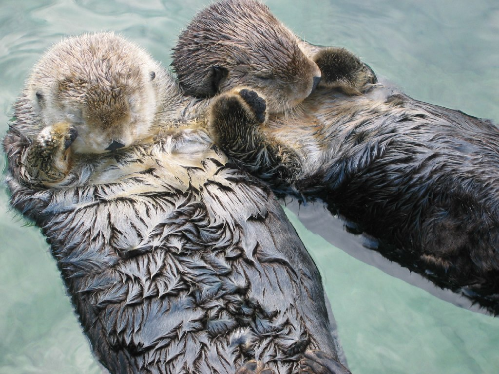 sea-otters-climate-change-solutions